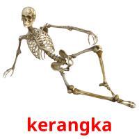 kerangka picture flashcards