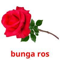 bunga ros picture flashcards