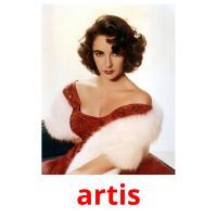artis picture flashcards