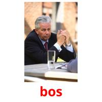 bos picture flashcards