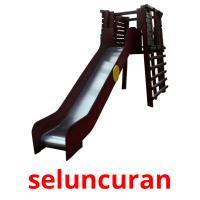 seluncuran picture flashcards