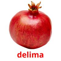 delima picture flashcards