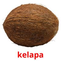 kelapa picture flashcards
