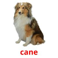 cane picture flashcards