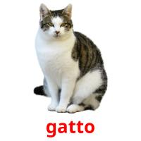 gatto picture flashcards