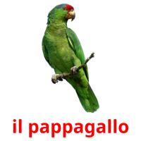 il pappagallo picture flashcards