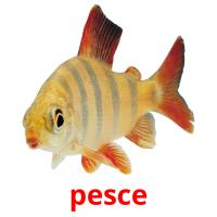 pesce picture flashcards