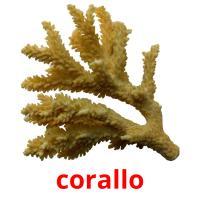 corallo picture flashcards