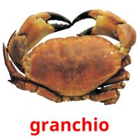 granchio picture flashcards