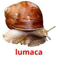 lumaca picture flashcards