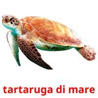 tartaruga di mare picture flashcards