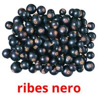 ribes nero picture flashcards
