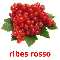 ribes rosso picture flashcards