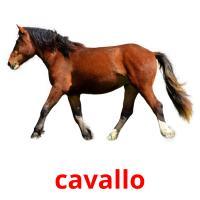 cavallo picture flashcards