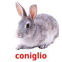 coniglio picture flashcards