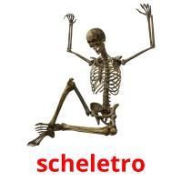 scheletro picture flashcards