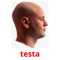 testa picture flashcards