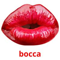 bocca picture flashcards