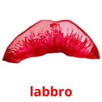 labbro picture flashcards