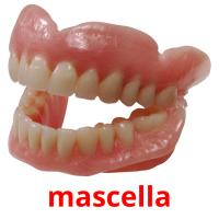 mascella picture flashcards