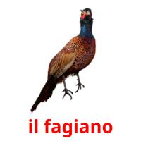 il fagiano picture flashcards