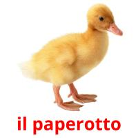 il paperotto picture flashcards