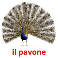 il pavone picture flashcards