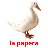 la papera card for translate