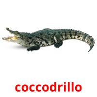 coccodrillo picture flashcards