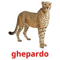 ghepardo picture flashcards