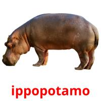 ippopotamo picture flashcards