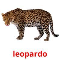 leopardo picture flashcards