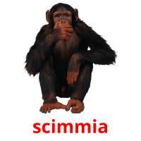 scimmia picture flashcards