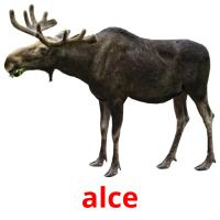 alce picture flashcards