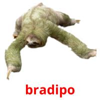 bradipo picture flashcards