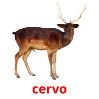 cervo picture flashcards