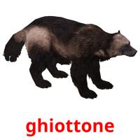 ghiottone picture flashcards