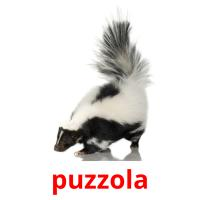 puzzola picture flashcards