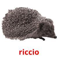 riccio picture flashcards