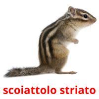scoiattolo striato picture flashcards