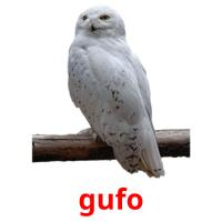 gufo picture flashcards