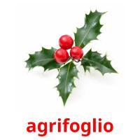 agrifoglio picture flashcards