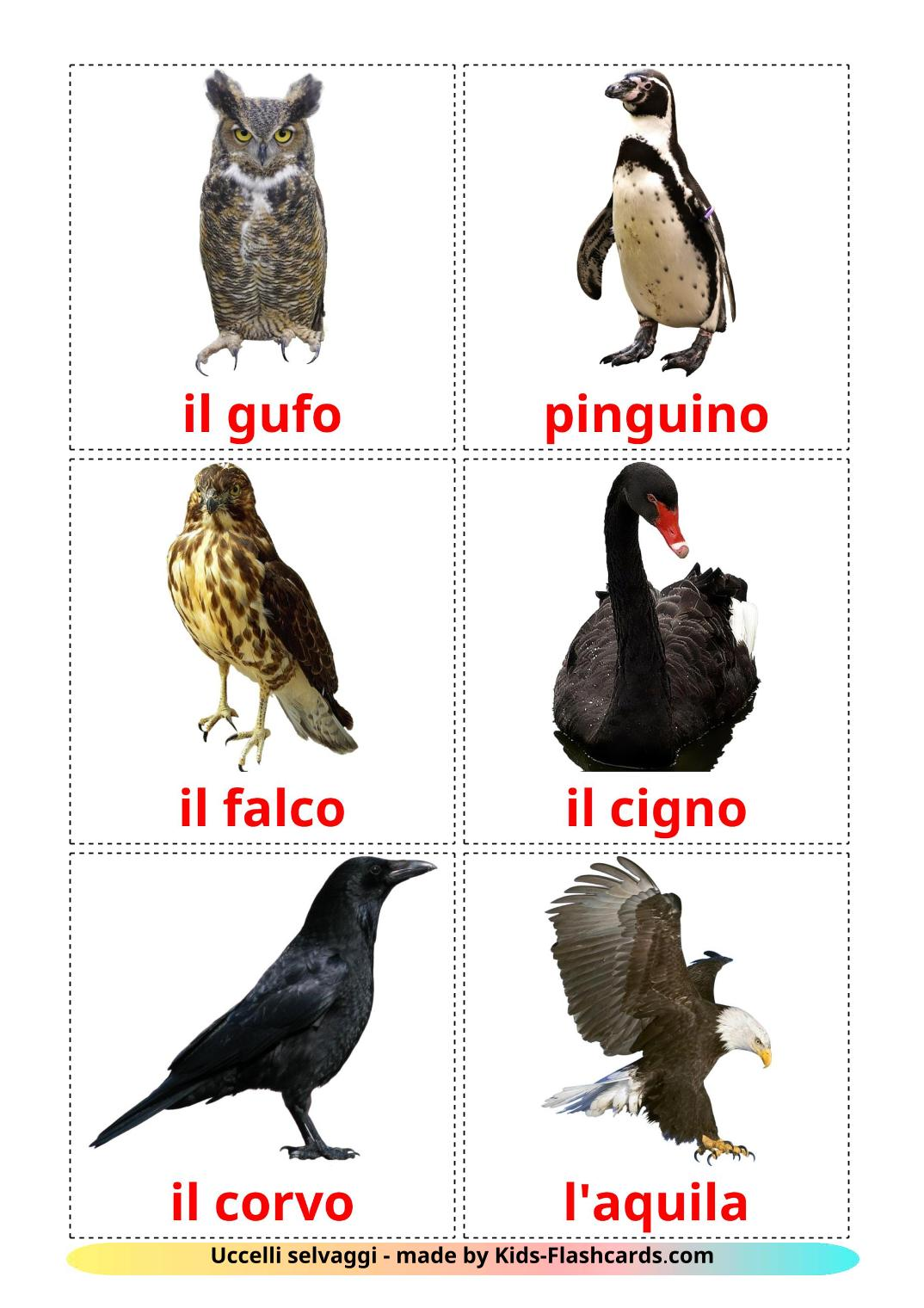 Wild birds - 18 Free Printable italian Flashcards