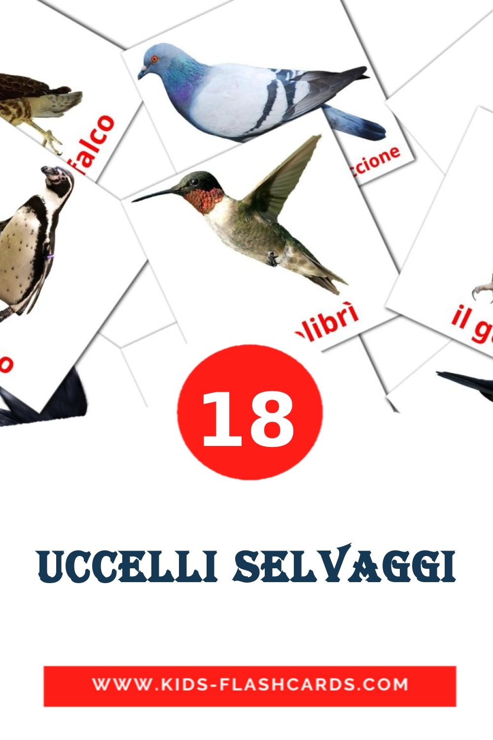 18 Uccelli selvaggi Picture Cards for Kindergarden in italian