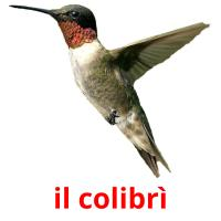 il colibrì picture flashcards