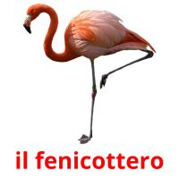 il fenicottero picture flashcards