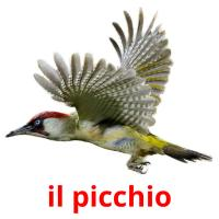 il picchio card for translate