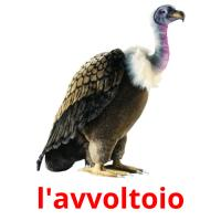 l'avvoltoio picture flashcards