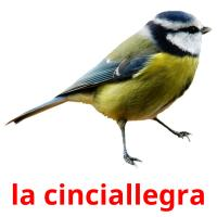 la cinciallegra picture flashcards