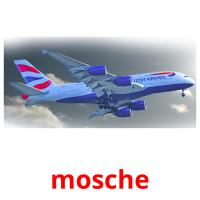 mosche picture flashcards